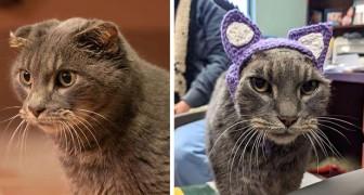 Questa gattina randagia perde le orecchie a causa di un'infezione: il rifugio le crea dei deliziosi copriorecchie viola