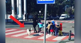 De hond stopt het verkeer zodat schoolkinderen de straat kunnen oversteken op de voetgangersoversteekplaatsen