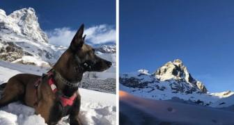 Ein Rettungshund überlebte 16 Tage lang in den Matterhorngletschern bei einer Temperatur von -25°C