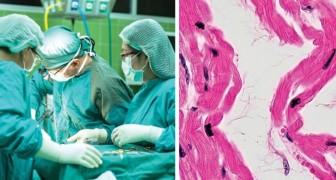 Per la prima volta sono stati trapiantati in un cuore umano muscoli cardiaci ottenuti da cellule staminali