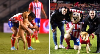 A stray dog came onto a soccer field during a game and now she is the mascot of a Mexican team