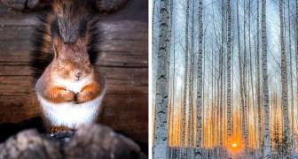 De foto's van deze getalenteerde jongen tonen de magie van de Finse bossen