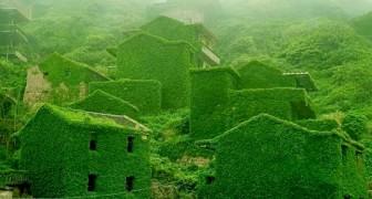 Dans ce village chinois, la nature a pris le dessus et a conquis les maisons et les routes abandonnées