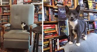 Tra gli scaffali di questa libreria si aggirano liberamente dolci gattini e i clienti possono anche adottarli