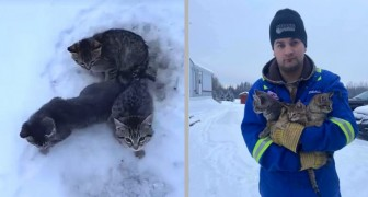 Deze man redde 3 kittens die gevangen in het ijs zaten, achtergelaten langs de weg