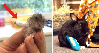 Ces 6 petits animaux aux mini-bandages aux pattes montrent le côté le plus adorable du travail vétérinaire