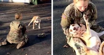 Volta para casa depois de oito meses de serviço militar e, no momento do abraço, o cachorro parece não reconhecê-la mais