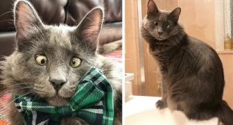 Questo gatto affetto da forte strabismo è diventato una vera star del web grazie alla sua dolcezza e simpatia