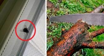 13 soluzioni fai-da-te per rendere la casa a prova di insetto