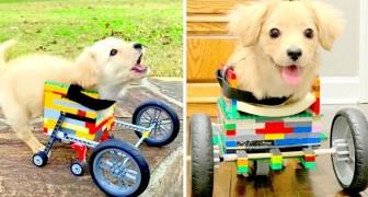 Hij kan zijn voorpoten niet gebruiken, dus bouwt een kind een rolstoel voor de hond van Lego