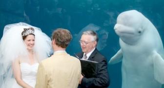 Een walvis onderbrak de huwelijkse belofte van dit paar vlak voor het ja-woord