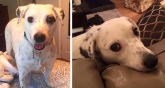 Her owner abandoned her because she is too clingy but now this dog has found a new family