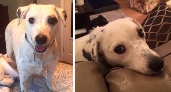 Haar baasje heeft haar verlaten omdat ze te gehecht is: nu is deze hond erin geslaagd een nieuw gezin te vinden