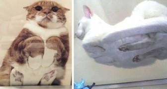 Katten liggend op glazen tafels: 10 keer waarin de eigenaren de verleiding niet konden weerstaan om ze te fotograferen