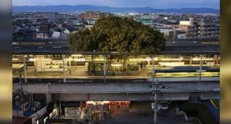 In Japan wurde dieser Bahnhof rund um einen 700 Jahre alten Baum gebaut...