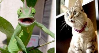 15 Tiere waren so überrascht, dass sie nicht anders konnten, als ihr Maul weit aufzumachen