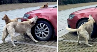 An abusive man chases away a dog sleeping in his parking space, and the dog takes revenge on the man's car