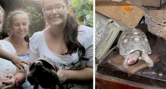Creyendo de haberla perdido para siempre, después de 38 años han encontrado su tortuga entre el polvo de los estantes