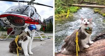 Gary, il gatto avventuriero che adora escursioni, campeggio e sentieri di montagna
