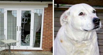 This dog broke through French doors and saved two defenseless women from domestic violence