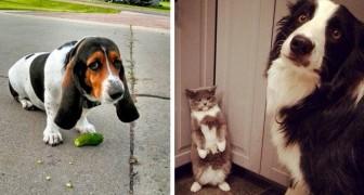 Deze huisdieren werden door hun eigenaren in absurde en hilarische handelingen vastgelegd