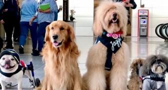 Deze luchthaven heeft 22 therapiehonden ingehuurd om de stress van reizigers tijdens lange wachttijden te verlichten