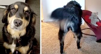 Este cachorro imita a sua dona que teve nenê tentando balançar o seu bichinho de pelúcia preferido na cadeirinha de balanço