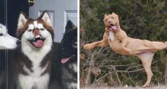 15 photos d'animaux tellement peu photogéniques qu'ils en deviennent adorables