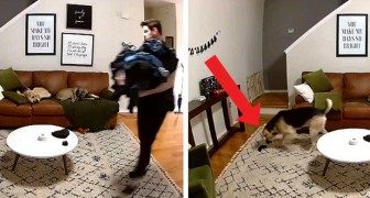 Deze hond hielp zijn eigenaar om de was te doen, een sok op te pakken en naar hem toe te brengen