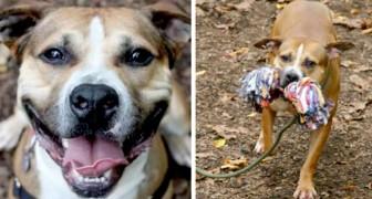 Het verhaal van Max, de vrolijke hond die al 9 jaar geen adoptiefamilie heeft kunnen vinden