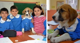 This school adopted a stray puppy: kids take care of it and even attend classes together
