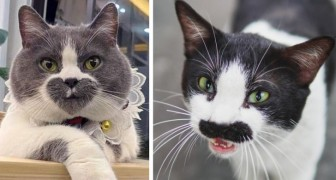 17 cats who look like they could be in a Ripley's Believe It or Not book