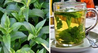 5 benefici della menta, una pianta ricca di proprietà amiche della salute da inserire nelle nostre ricette