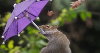 Een fotograaf vereeuwigt een eekhoorn die met zijn kleine paraplu tegen de wind vecht