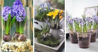 12 idee irresistibili per coltivare i bulbi in casa, anche senza terra