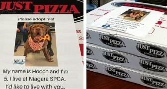 Una pizzeria mette le foto dei cani di un rifugio sui cartoni per aiutarli a trovare casa