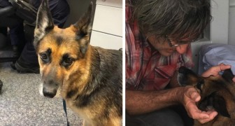 His boat starts sinking unexpectedly in the middle of the ocean: his dog stays by his side for 11 hours, finally finding someone to rescue them