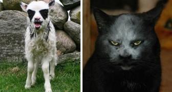 11 photos d'animaux qui semblent être nés pour jouer dans un groupe de Black Metal
