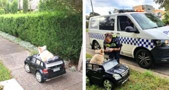Deux policiers ne peuvent s'empêcher de s'arrêter pour observer un chien conduisant une voiture sur le trottoir