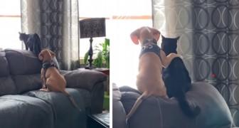 L'amitié entre chien et chat dans toute sa tendresse : le toutou prend littéralement son ami félin dans ses pattes