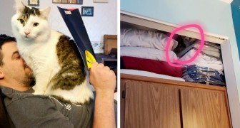 17 escenas de la vida cotidiana que solo nuestros animales domésticos logran poner en movimiento