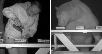 Eftersom björnarna fortsatte att stjäla hans honung, bestämde sig en biodlare för att göra dem till provsmakare