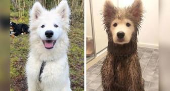 14 photos de chiens qui viennent de découvrir les joies de se rouler dans une flaque de boue