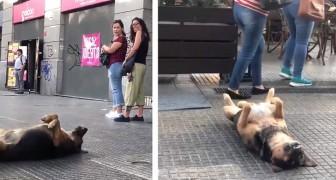 Un cane si sdraia a pancia in su sul marciapiede e fa un riposino, regalando ai passanti una scena memorabile