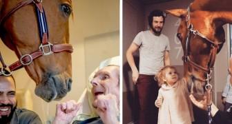Peyo, il cavallo da terapia che ogni mese visita i pazienti più fragili negli ospedali per dargli conforto