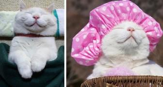 Shiro, il gatto più rilassato del mondo continua ad insegnarci a vivere sereni anche dopo essersene andato