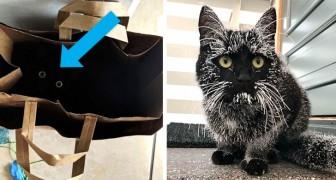 13 denkwürdige Aufnahmen von schwarzen Katzen, die in ihrer ganzen Sympathie und Eleganz gezeigt werden