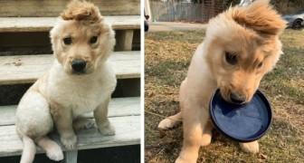 Este filhote tem apenas uma orelha e todos o chamam de o cachorro unicórnio: quando um defeito se transforma em qualidade