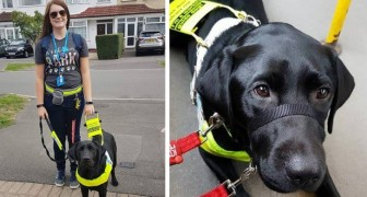 Geleidehonden mogen niet zwart zijn: een domme passagier roept tegen een blind meisje om de bus uit te stappen