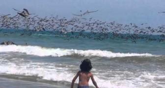 Pelicanos pescadores